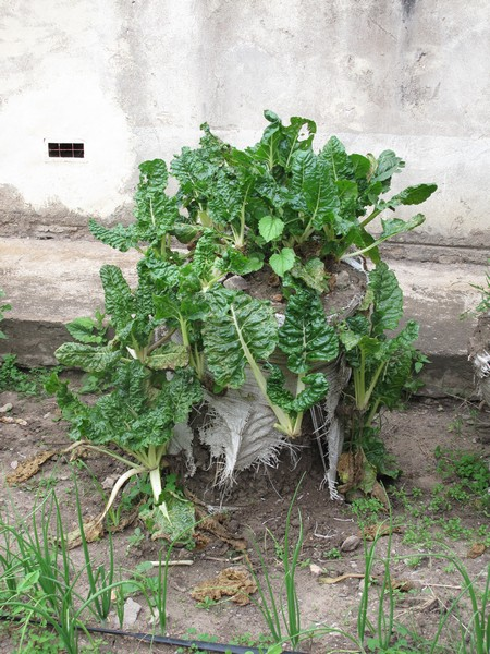 Vegetali crescono