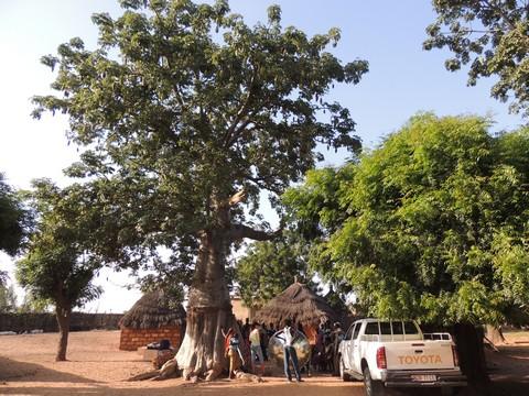 Senegal2013-14 baobab