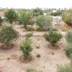 Gli alberi piantati in cambio dei pannelli fotovoltaici delle scorse volte sono cresciuti