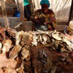 Negozio di pesce essiccato